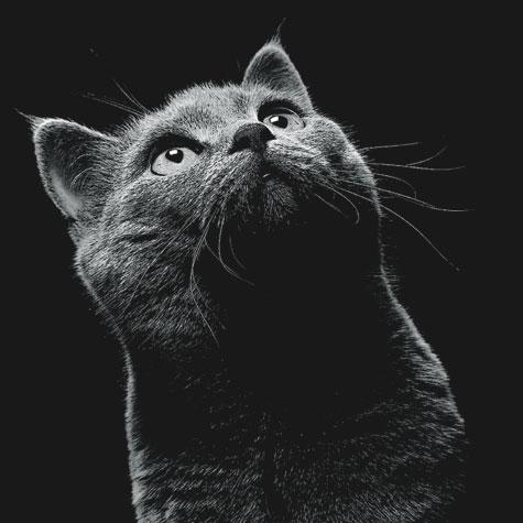 Корма Busco для кошек