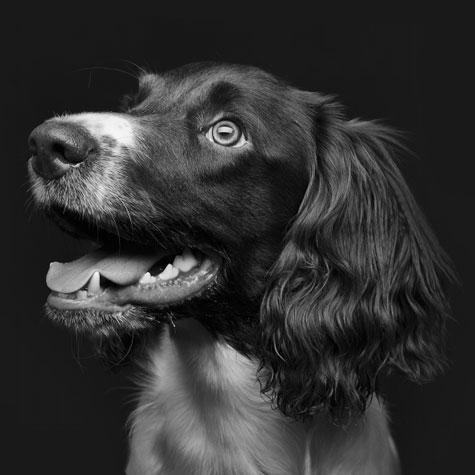Корма Busco для собак