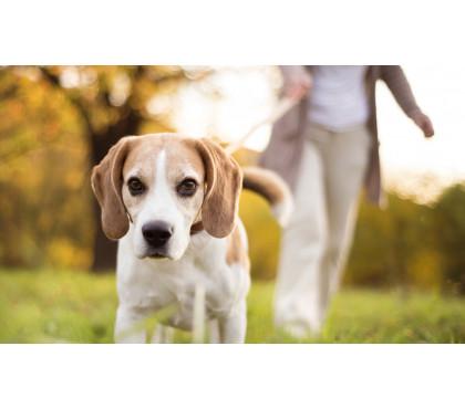 Как часто нужно гулять с собакой?