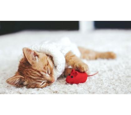 Котенок много спит, это нормально?